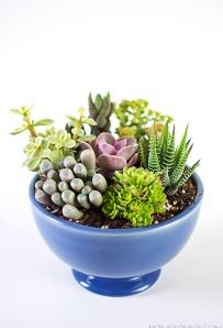 DIY-Mini-Succulent-Garden1