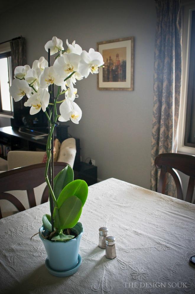 Orchids WM