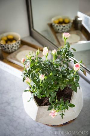 Mini Roses.jpg